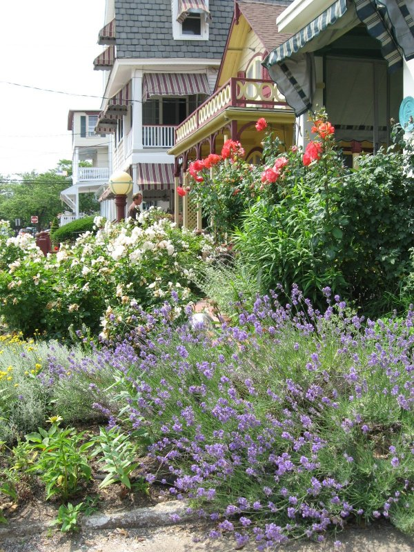Lavender perfumes your front entrance